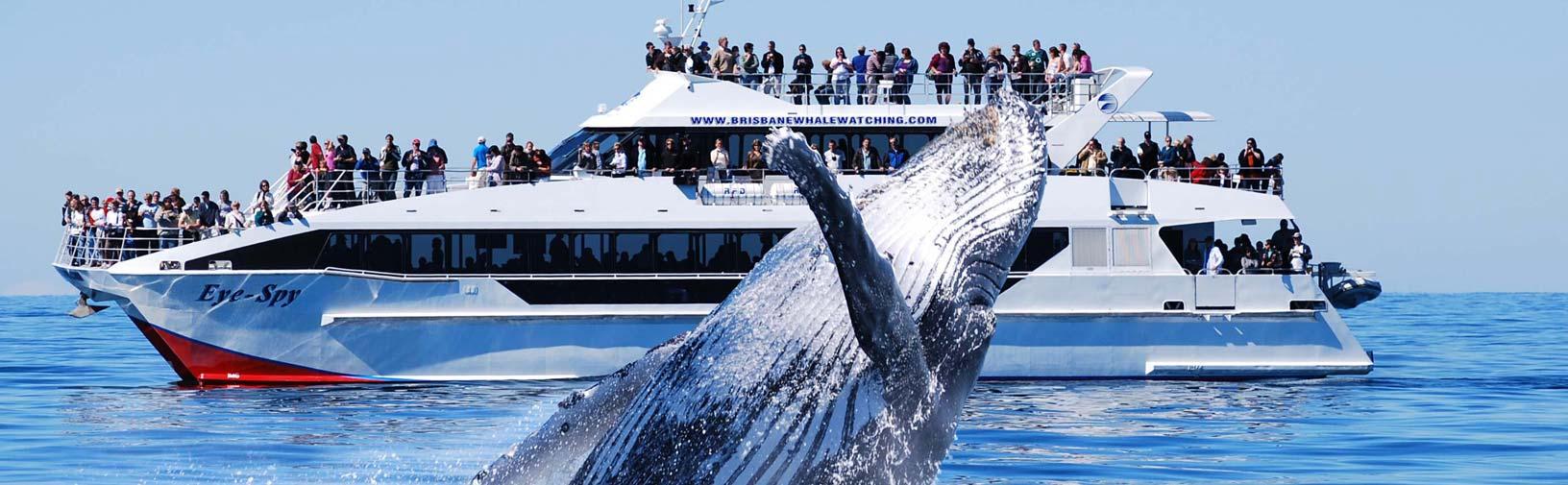 whale-21.jpg
